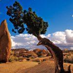 美国加州约书亚书国家公园Joshua Tree National Park