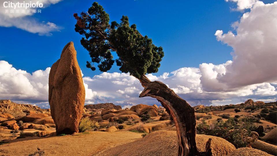 《美国加州约书亚书国家公园Joshua Tree National Park》