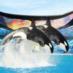 美国加州圣地亚哥神奇的动物之旅