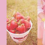 美国洛杉矶周边采摘路线—草莓篇
