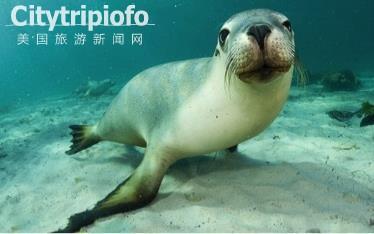 《洛杉矶长堤市太平洋水族馆  Aquarium of the Pacific》