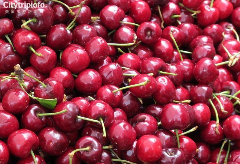 洛杉矶樱桃谷  Cherry Festival Association