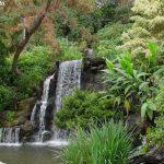 洛县植物园  L.A. County Arboretum & Botanic Gardens