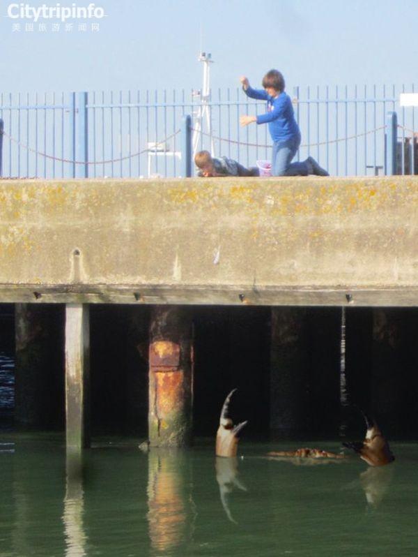 《英国再现巨蟹照片 目测或有15米长(图)》