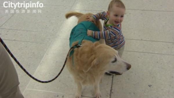 没有最萌只有更萌 小狗机场陪伴旅客舒压