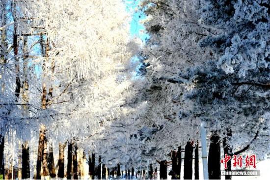 自然奇观/黑龙江大兴安岭 现绵延数公里雾淞美景