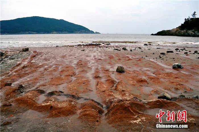 自然奇观|浙江舟山现「艳红石滩」 游客叹为观止!