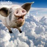 宠物猪大闹美国航班:随地排泄乱叫被赶下飞机