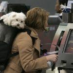 调查:52%美国乘客赞同将宠物带入客舱