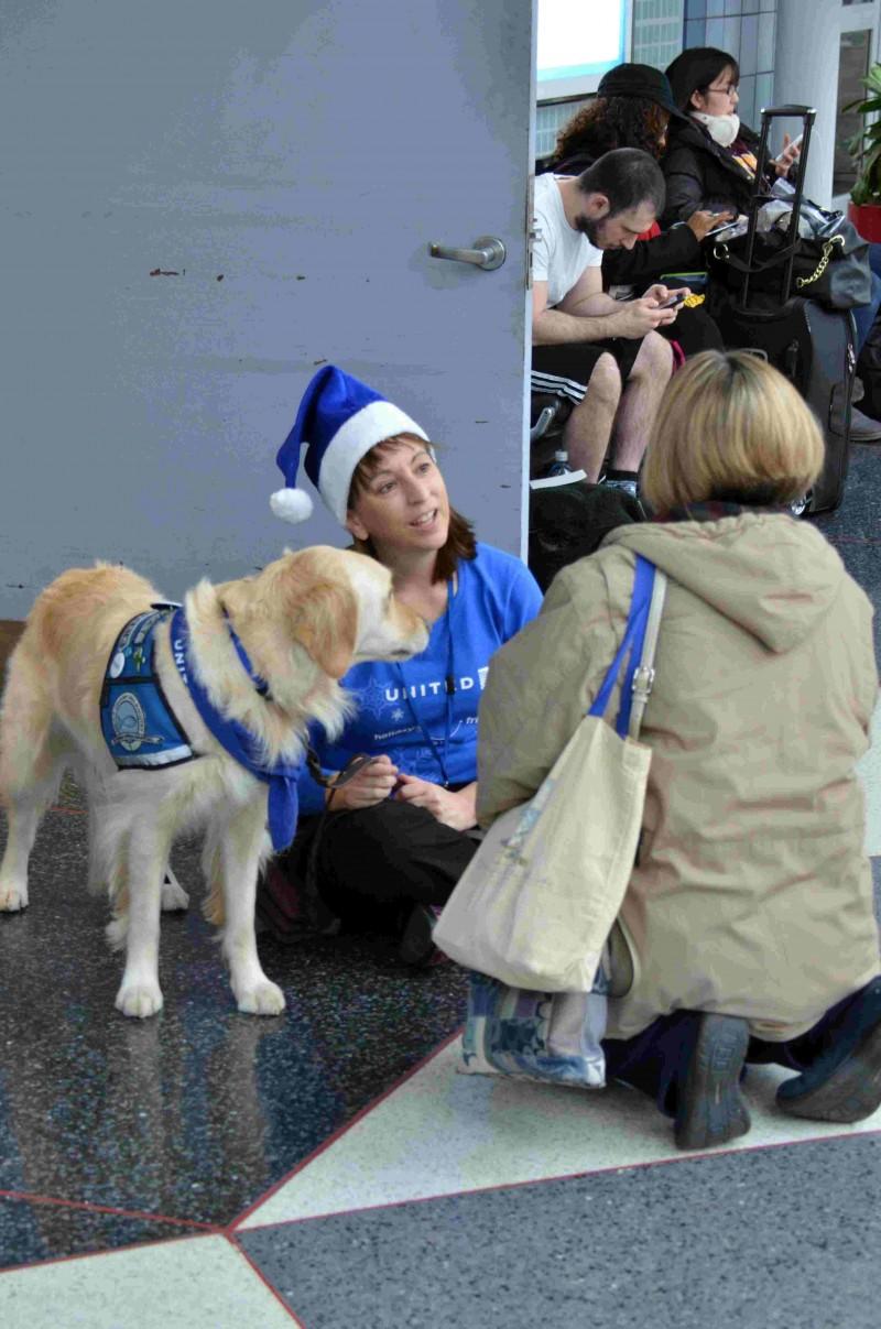 《减轻圣诞假期搭机压力?美机场派黄金猎犬减压!》