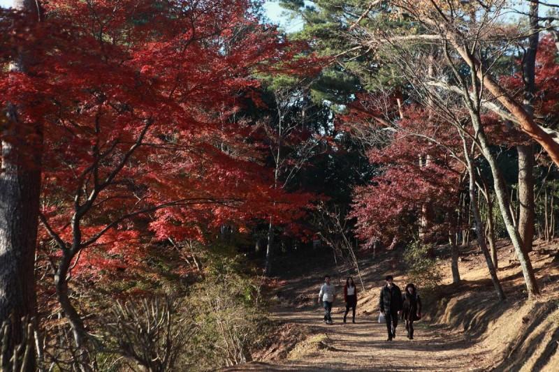 日本红叶翩翩落!静冈修善寺 泡汤吃冰赏枫红