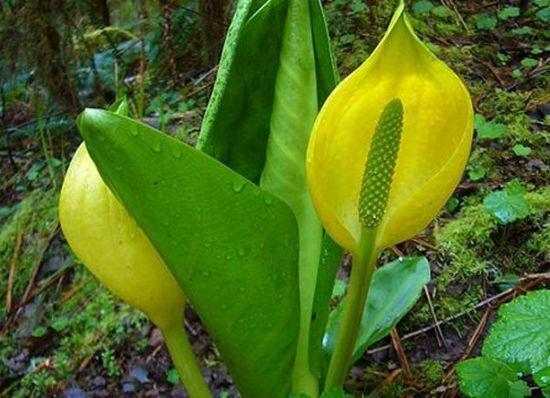盘点全球十种散发恶臭的植物