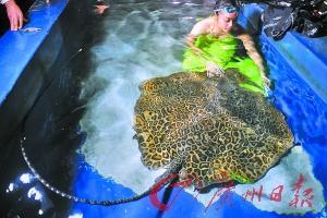 《马尔代夫发生多起被鱼扎伤事件 在海边小心魔鬼鱼》