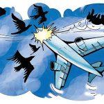 14年孟买机场发生22起鸟击 专家呼吁绘制鸟图