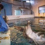 海洋公园的海豚将何去何从?