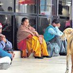 当汪星人遇上德里机场 流浪狗成为旅客噩梦