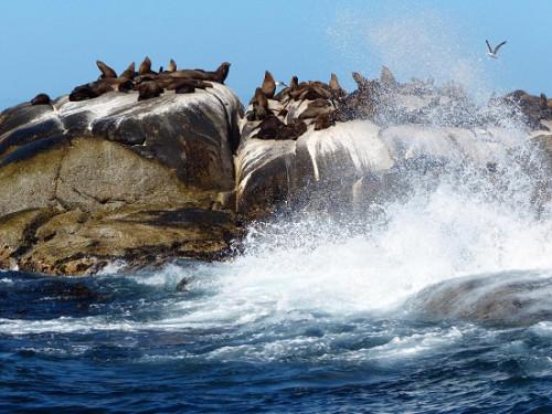 《被动物占领的小岛:红蟹遍地跑 野猪水中游(图)》
