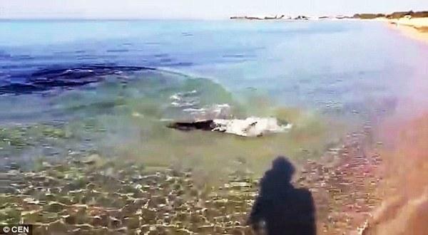 意大利游客意外拍到鲨鱼捕食镜头(图)