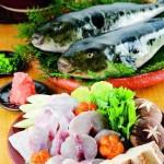 要人命的河豚你敢吃吗 为什么日本人钟爱河豚肉