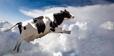 全球罕见的动物雨:蟾赊从天而降