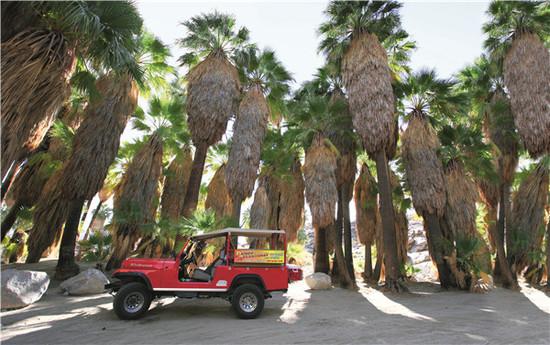 棕榈泉公园游览时游客可以乘坐越野车体验西部旷野景观。