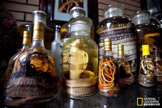 在越南河内,蛇酒随处可见。把活蛇扔到米酒里,就成了这瓶蛇酒。摄影:LUONG THAI LINH, EPA/CORBIS