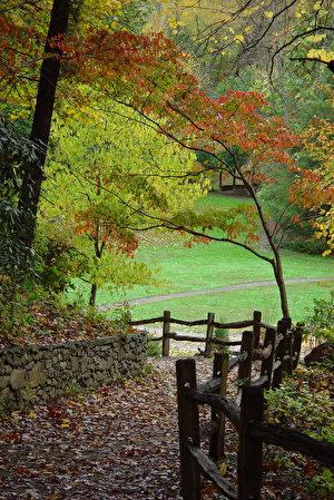 阿什维尔(Asheville)植物园。(Zen sutherland, Wikimedia Commons)