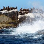 被动物占领的小岛:红蟹遍地跑 野猪水中游(图)